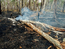 Bush/fuego salvaje foto de archivo