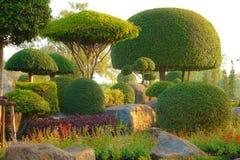 Bush garden Royalty Free Stock Images