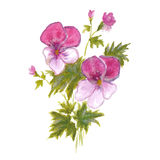 Bush garden pink pansies Royalty Free Stock Photography