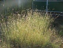 Bush gräs Royaltyfria Bilder