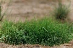 Bush gräs på sjön Royaltyfri Fotografi