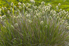 Bush grass. In the field Royalty Free Stock Photo