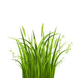 Bush grass Royalty Free Stock Photos