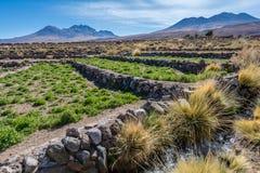 Bush, grass, mountain and stream at Atacama Desert, Chile Stock Photos
