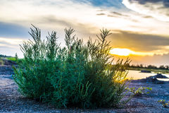 Bush grass and sunset. Bush green grass with the sunset on the day beautiful clouds Royalty Free Stock Images