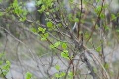 bush with green foliage stock photo