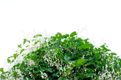 A bush with green leaves against a white sky. Minimalism royalty free stock images