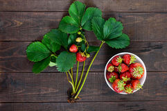 A bush with green leaves and berries, a bowl with strawberries Stock Photography