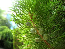 Bush green plants Stock Images
