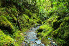 Bush Green Rain Forest New Zealand Stock Images