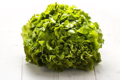 Bush of Green Salad Royalty Free Stock Image