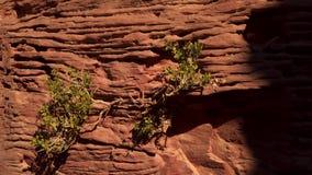 The bush growing among the rocks stock footage