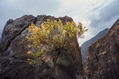 Bush growth in rock. Scenic tiny bush growth from huge rock in Peruvian Andes royalty free stock photo