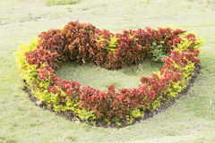 Bush have heart shape Stock Photo