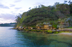 Bush Headland Sydney Harbour Royalty Free Stock Photos
