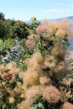 Bush hermoso en la playa fotografía de archivo
