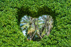 Bush with a hole in the form of a heart. Love Concept. Stock Images