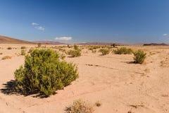 Bush i öknen, Marocko Arkivfoto