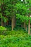Bush i drzewo Zdjęcie Royalty Free
