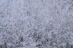 Bush i snön, bakgrund Arkivfoto