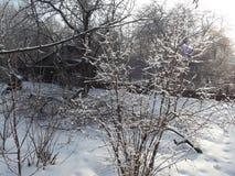 Bush i snön som är upplyst vid solen Royaltyfri Bild