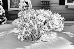 Bush i vintern #2 Fotografering för Bildbyråer