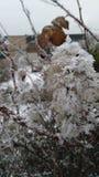 Bush i vintern Fotografering för Bildbyråer