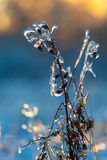 Bush in the ice. Bush in the ice in evening Royalty Free Stock Photos