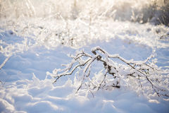 Bush in Ice and Snow Stock Photo