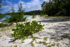 Bush in ile du cerfs mauritius Royalty Free Stock Images