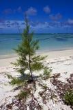 Bush im Mauritius-Strand Stockbild