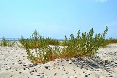 Bush im Sand Lizenzfreie Stockbilder