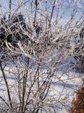 Bush im Winter Lizenzfreie Stockbilder