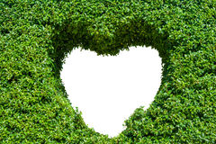 Bush with isolated hole in the form of a heart. Love Concept. Stock Images