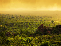 Bush in Kenya, Africa. Tsavo West National Park Stock Photo