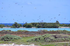 Bush Key Birds. Flying over Dry Tortugas national park key west Fl Stock Photography