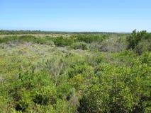 Bush krajobraz Zdjęcia Royalty Free