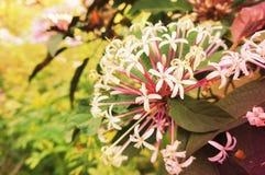 Bush kwiat robi lekkiej miękkiej części obrazy royalty free