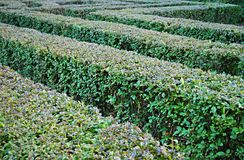 Bush labyrinth Royalty Free Stock Photo