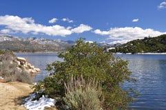 bush lakeshore стоковая фотография rf