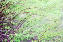 Bush with leaves. On a green background Stock Photos