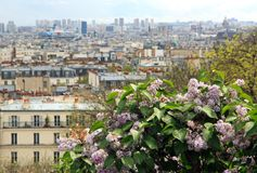 Bush of lilac in the rain, Paris (France) Stock Photos