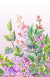 Bush of lilac with watercolor. Floral background painted by han Stock Photos