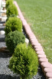 Bush in line. Various bush in line in garden stock photo