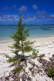 Bush in mauritius beach Stock Image