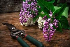 Bush may lilac Royalty Free Stock Photo