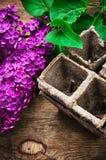 Bush may lilac and peat pot Royalty Free Stock Photography