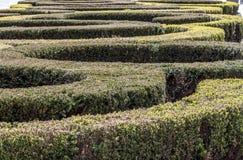 Bush maze Royalty Free Stock Photos