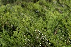Bush med bär Lanscape design trädgårdar royaltyfri foto
