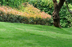 Bush mit rotem Blatt, Bäumen und Wiese Stockfotografie